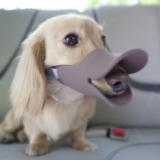 Quack Duck Dog Muzzle