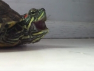 This Turtle Sneezing Is Way Cuter Than It Should Be