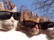 Cats Wearing Sunglasses Is The Only Video That Matters