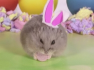 Tiny Hamsters Dressed Up For Easter, Hunting For Eggs