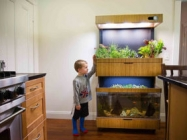 A Genius Self-Sustaining Garden And Aquarium Combo