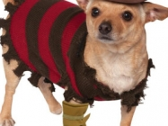 Check Out This Ridiculous Freddy Krueger Costume For Pets