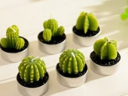These Super Cute Cactus Candles Will Light Up Any Room!