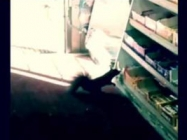 Watch Squirrels Steal Candy From A Convenience Store