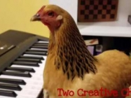 A Chicken Playing 'America The Beautiful' On The Keyboard