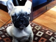 An Adorable Compilation Of Puppies Trying Not To Fall Asleep