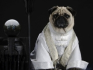 Pugs Dressed Up As LOTR Characters