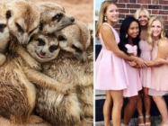 We Can No Longer Ignore That Sorority Girls Pose Like Meerkats