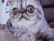 Herman The Concerned Kitten Is The Internet's New Favorite Cat