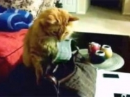 A Three Minute Compilation Of Cats Stealing Money