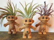 A Plantroll Is A Troll Doll With An Air Plant For Hair