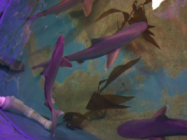 Sharks Found Swimming in the Basement of Home In New York