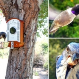 Bird Photo Booth