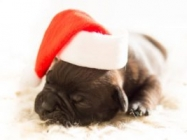 Holiday Gift Guide for Pets and their Parents