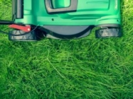 How to Get the Lushest Lawn on the Block in 5 Easy Steps