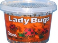 Live Ladybugs, Approximately 1,500 Count