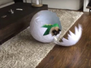 See A Cat In A Dinosaur Costume Hatch From An Egg