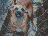 Dog Bite Personal Injury Lawsuit